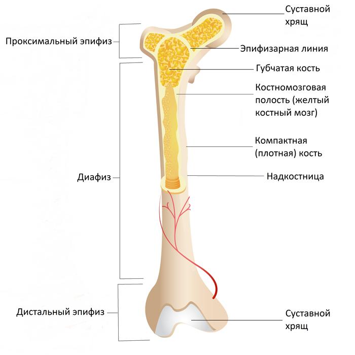 a vállízület sérülése esetén kötést kell felvinni