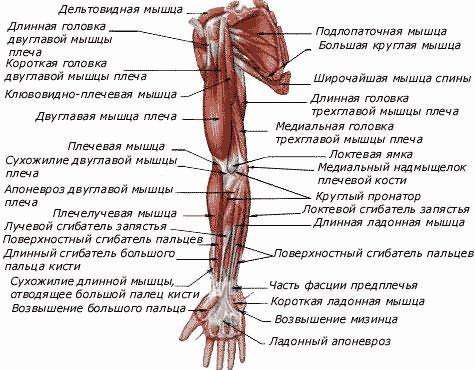 térdízület deformáló osteoarthritis kezelési áttekintése a)